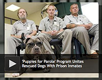 puppies for parole