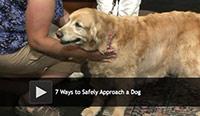 safely approach a dog
