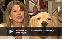 wearable technology for dogs