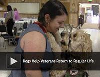 Dogs Help Veterans Return to Regular Life