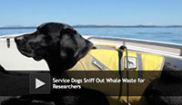 Dogs Sniff Out Whale Waste