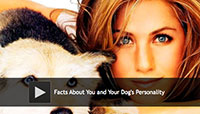 Facts About You and Your Dog's Personality