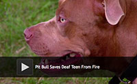 Pit Bull Saves Deaf Teen From Fire