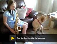 dog and sax