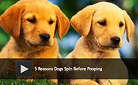 5 Reasons Dogs Spin Before Pooping