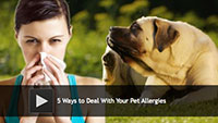 5 Ways to Deal With Your Pet Allergies