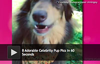 8 Adorable Celebrity Pup Pics