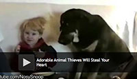 Animal Thieves