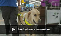 Guide Dogs Trained at Heathrow Airport