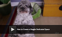 How to Create a Doggie Dedicated Space
