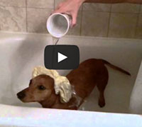 Dogs with Ice Bucket Challenge