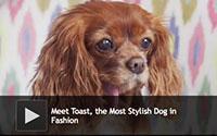 Most Stylish Dog in Fashion