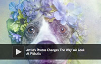 Photos Changes The Way We Look At Pitbulls