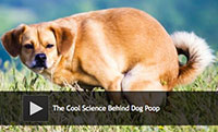The Cool Science Behind Dog Poop