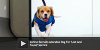Airline Recruits Adorable Dog For 'Lost And Found' Service