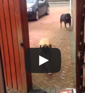 Dog Retrieves Grocery Bags