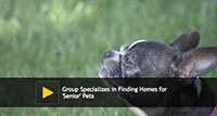 Group Specializes in Finding Homes for Senior Pets