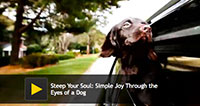 Joy Through the Eyes of a Dog