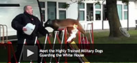 Meet the Highly Trained Military Dogs Guarding the White House