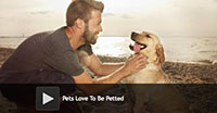 Pets Love To Be Petted