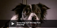 Service Dogs Talk With Help From Technology