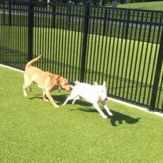 Triangle Dog Park in Rising Sun Maryland
