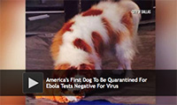America's First Dog To Be Quarantined For Ebola Tests Negative For Virus