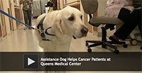 Assistance Dog Helps Cancer Patients