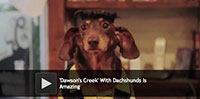 Dawsons Creek With Dachshunds