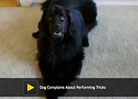 Dog Complains About Performing Tricks