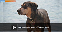 Dog Running for Mayor of Oakland