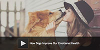 How Dogs Improve Our Emotional Health