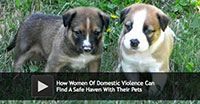 How Women Of Domestic Violence Can Find A Safe Haven With Their Pets