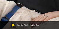 How the FDA Are Helping Dogs