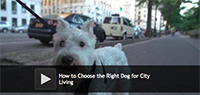 How to Choose the Right Dog for City Living