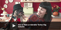 How to Make an Adorable 'Turkey' Dog Costume