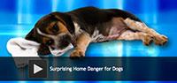 Surprising Home Danger for Dogs