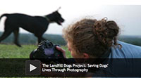 The Landfill Dogs Project