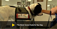 The Worst Human Foods for Your Dog