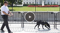 These dogs protect the president