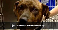 10 Incredible Acts Of Kindness By Dogs