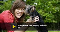 5 Things to Do After Adopting Your New Pet