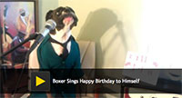Boxer Sings Happy Birthday to Himself