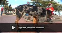 Dog Pushes Himself on Skateboard