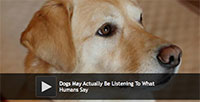 Dogs May Actually Be Listening To What Humans Say