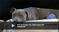 How to Change Your Dog's Puppy-Like Misbehavior
