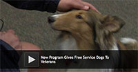 New Program Gives Free Service Dogs To Veterans