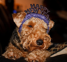 New Year's Eve Safety Tips for Your Dog