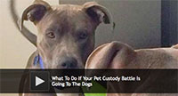 Pet Custody Battle