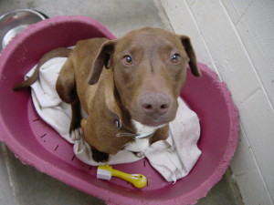 Remember, Your Animal Shelter Donations Are Tax Deductible